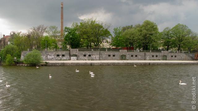 Лебеди на Влтаве, Прага, Чехия