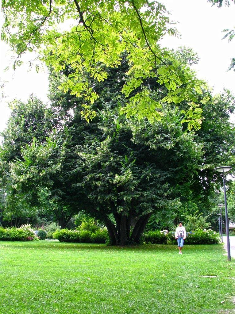 Ботанический сад в Мюнхене