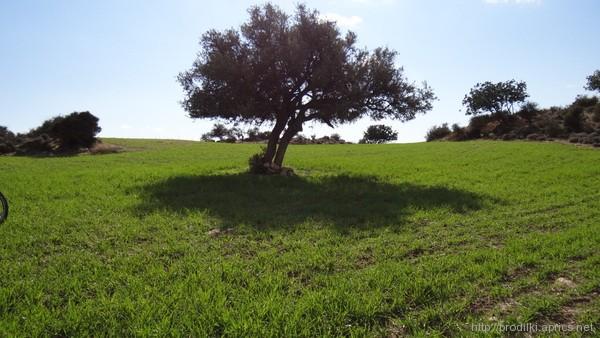 Январь на Кипре