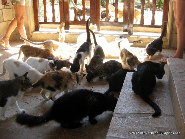 """Кошки на Кипре: Обитатели """"Кошачьего"""" Монастыря"""