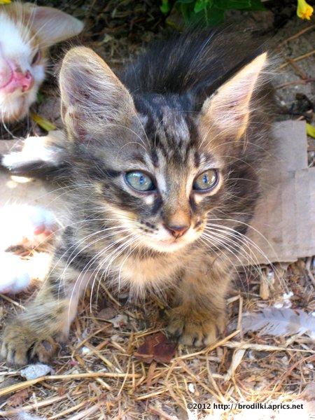Кошки на Кипре: Пляжный котёнок